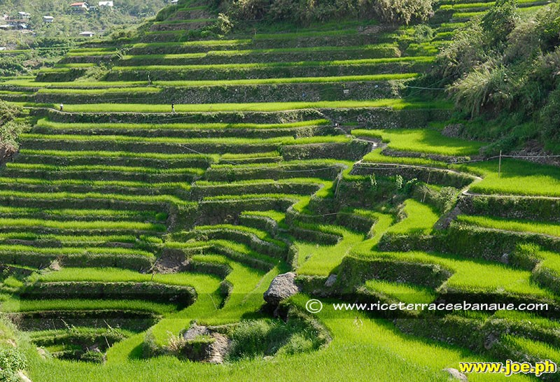 Banaue rice terraces philippines web for What are terraces